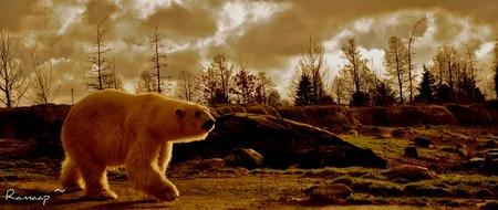 Going Back - Een foto gemaakt in Blijdorp Rotterdam - foto door ramaap21 op 07-09-2011 - deze foto bevat: zon, dierentuin, sneeuw, ijs, vogel, hond, ijsbeer, koud, mooi, beer, blijdorp, lopen, cold, polar, bear, polar bear, polarbear
