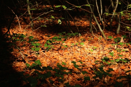 Fall-Forest-magic
