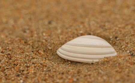 zeeschelpje - - - foto door lianedeprost op 05-03-2021 - deze foto bevat: macro, zee, zand, schelp