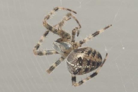 Als een spin in het web.