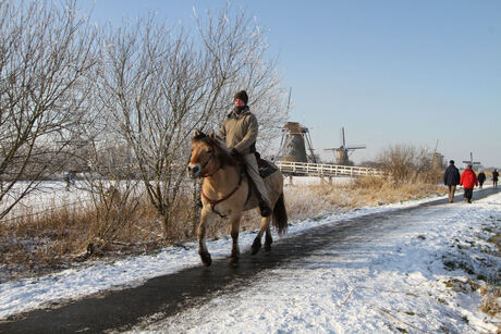 Wintersfeer met paard op Kinderdijk