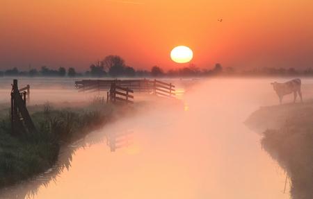 Mistige ochtend - een mistige ochtend in de polder - foto door b.neeleman op 29-08-2015