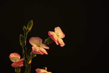 Oefening cursus scherpte en scherptediepte - - - foto door GerardSchouten op 16-02-2020 - deze foto bevat: roze, macro, bloem