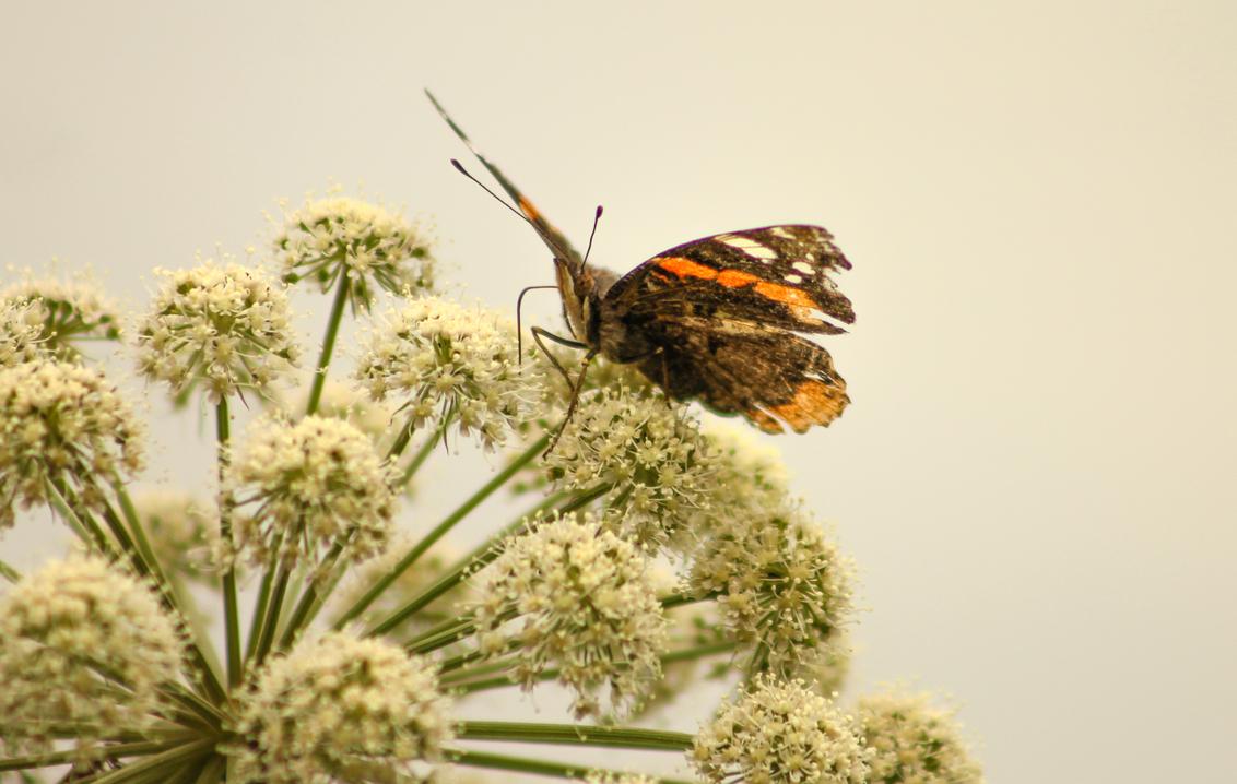 Butterfly History - Mooie oude vlinder, toont zijn vleugels voor de laatste keer. - foto door KoenvdDool op 26-10-2014 - deze foto bevat: groen, macro, zon, boom, bloem, natuur, vlinder, geel, licht, herfst, blad, dieren, bos, insect, nederland
