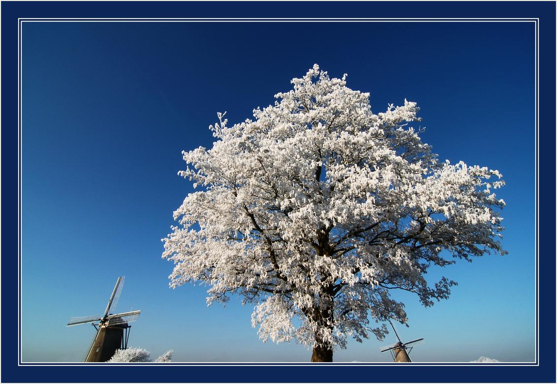 Witter dan wit... - De rijp van afgelopen vrijdag was erg bijzonder. Elke kale en saaie boom  veranderde in een mooie witte boom... Ik kon er geen genoeg van krijgen, d - foto door Foto_Marleen op 14-01-2009 - deze foto bevat: boom, rijp, winter, molens, kinderdijk