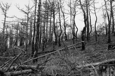 Verbrand! - Met Welmanstudio naar de Schoorlse duinen, fotograferen in het verbrande gedeelte. Opdracht: zwart wit. - foto door yvonnevandermeer op 28-03-2013 - deze foto bevat: duinen, schoorl, roet route