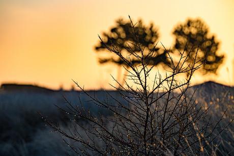 Kamperland ochtendgloren