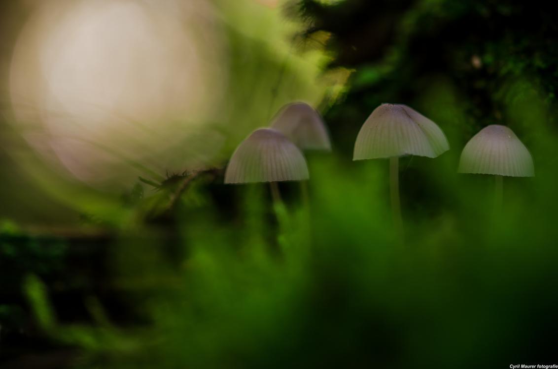 Mysterious green with Mushrooms - Was na me werk even op paddo jacht en zag ik dit groepje . Die moesten op de foto ze zaten goed verstopt . Ben blij dat ik ze gespot heb. En dat heef - foto door sipmaurer op 12-10-2015 - deze foto bevat: groen, macro, natuur, bruin, paddestoel, herfst, zwart, bos, dof, bokeh, donkere sfeer