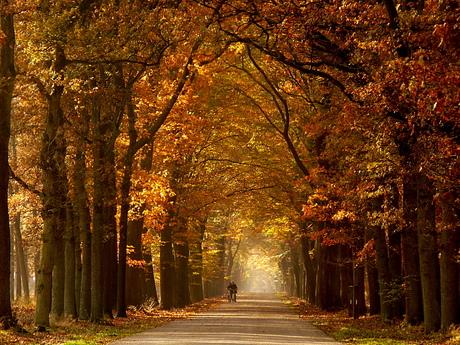 fietsers op lange laan in herfstkleuren