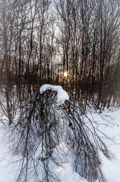 Snow forest with sunburst