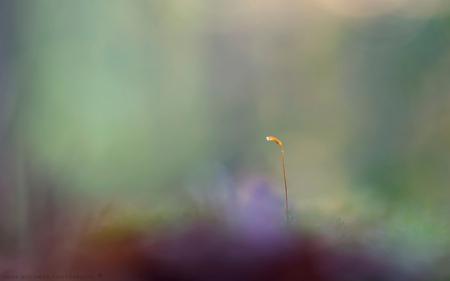 On his bike - Je kent ze wel, die vlaggetjes achterop de fiets. Het kwam als een speer voorbij. Wat of wie zou erop gezeten hebben, een springstaartje, kaboutert - foto door h.meeuwes op 15-10-2018 - deze foto bevat: macro, klein, licht, paddestoel, herfst, paddenstoel, bos, zoomdag, dorst, sfeer, oktober, najaar, dof, bokeh, vlaggetje, haarmos, henk meeuwes