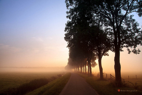 Trees in the mist.......