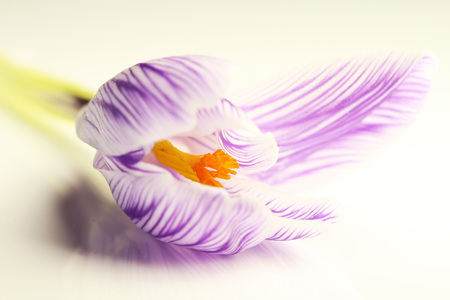 Krokus - Wat is de natuur toch mooi. Echte kunstwerkjes zijn bloemetjes toch. Knuffels Kaatje - foto door LadyLipstick1 op 28-02-2021