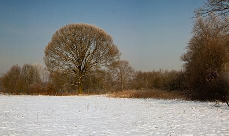 Winter op de Hoge Rielen