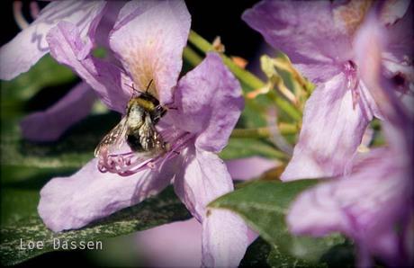 Nectar zoeken