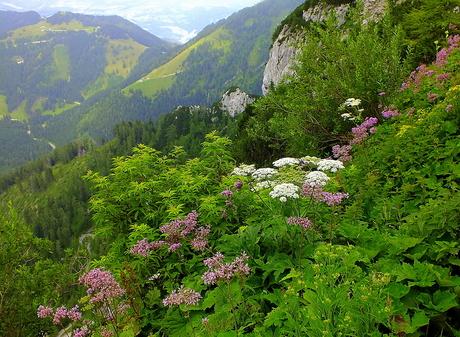 Mountainflora
