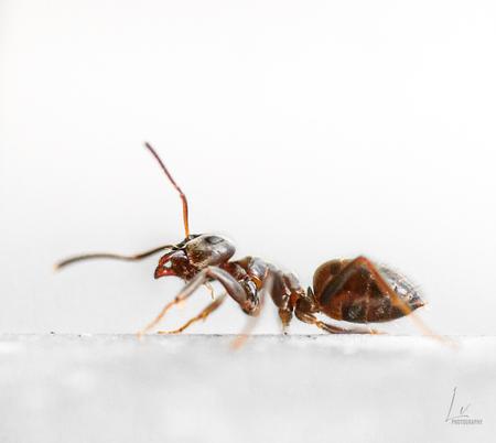 Harde werker - Onderweg naar boven in de plantenbak, foto gedraaid - foto door Lauravol op 14-04-2021 - locatie: Pijnacker, Nederland - deze foto bevat: mier, insect, macro, natuur, werker, compositie, dieren, insect, geleedpotigen, kever, plaag, parasiet, mier, ongewervelden, terrestrische dieren, membraan-gevleugeld insect, macrofotografie