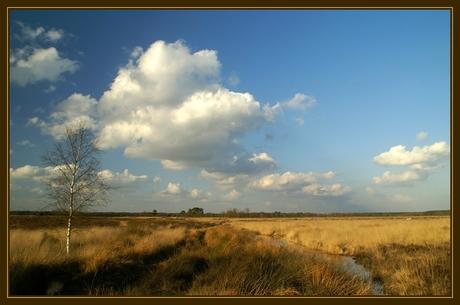 Dwingelderveld (6)