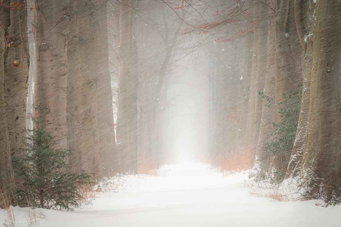 Lane in winter - Buiten huilt de wind om 't huis Maar binnen stond de kolenkit paraat En de stoep waarop geknikkerd werd Was het belangrijste stukje van de straat - foto door renevierhuis op 10-02-2021 - deze foto bevat: natuur, sneeuw, winter, landschap, bomen, kou, lange sluitertijd