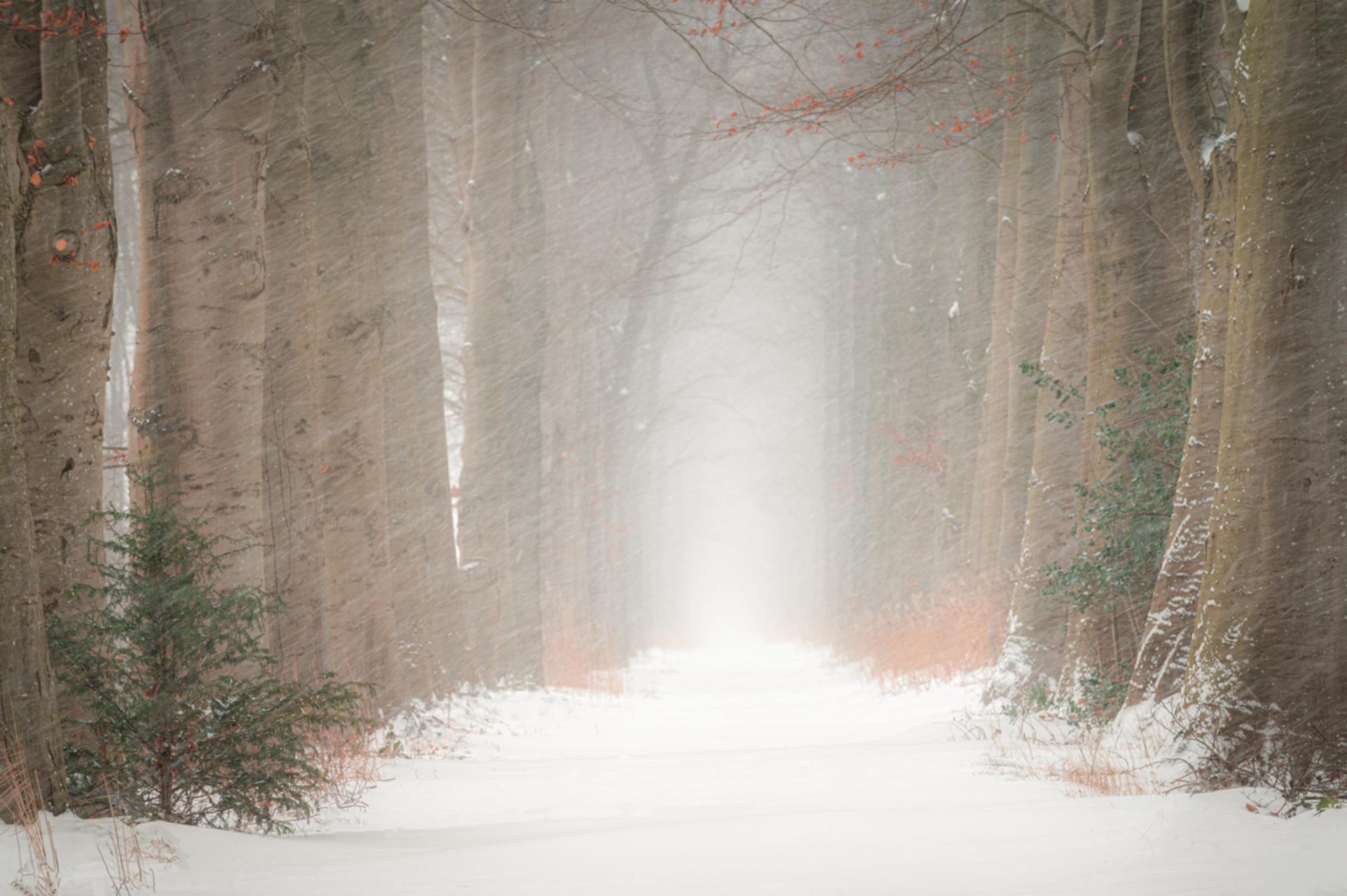 Lane in winter - Buiten huilt de wind om 't huis Maar binnen stond de kolenkit paraat En de stoep waarop geknikkerd werd Was het belangrijste stukje van de straat - foto door renevierhuis op 10-02-2021 - deze foto bevat: natuur, sneeuw, winter, landschap, bomen, kou, lange sluitertijd - Deze foto mag gebruikt worden in een Zoom.nl publicatie
