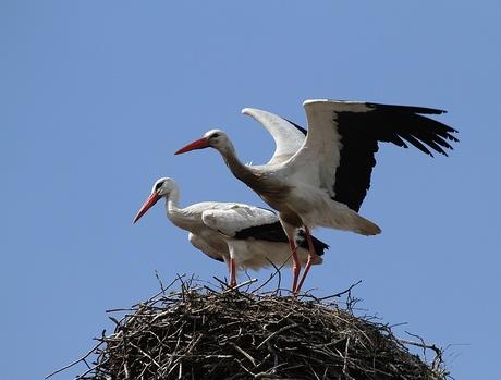 Pa en Ma op het nest