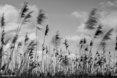 Wind - Oostvaardrsplassen, Nederland