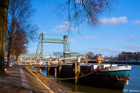 Gewoon Rotterdam