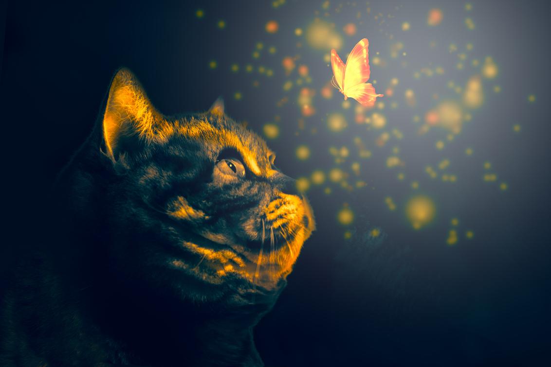 poes met vliner - onze kat kijkt graag naar vlinders - foto door nilix op 18-02-2020 - deze foto bevat: licht, poes, structuur, bewerkt, fantasie, kat, bewerking, photoshop, creatief, sprookje, wallpaper, bokeh, lightroom, bewerkingsuitdaging