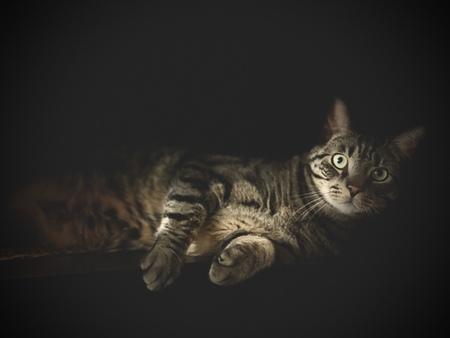 Max - Mijn lieve kat - foto door Bierman67 op 12-04-2021 - deze foto bevat: kat, felidae, carnivoor, bakkebaarden, kleine tot middelgrote katten, snuit, vacht, terrestrische dieren, duisternis, binnenlandse kortharige kat