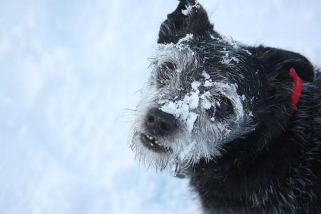 Ons maatje Robin - - - foto door meijco op 04-01-2010 - deze foto bevat: winter, dieren, hond