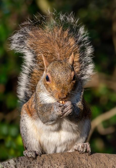 Let me eat my walnut