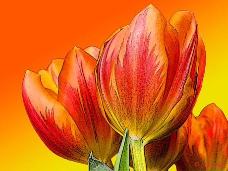 tulpenkunst II