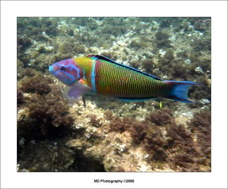 onderwaterwereld 3
