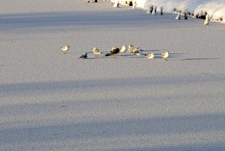 Winter in NL 2010