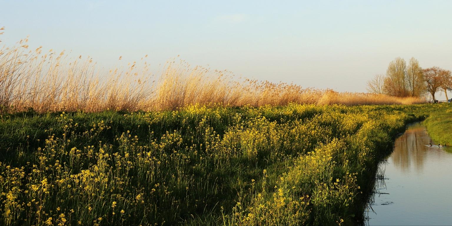polderplaatjes - - - foto door onne1954 op 21-04-2021 - deze foto bevat: lanschap, koolzaad, sloot, riet, voorjaar, slootkant, bloem, lucht, fabriek, plant gemeenschap, water, mensen in de natuur, natuurlijk landschap, landbouw, gewoon, boom
