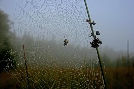 web met spin.