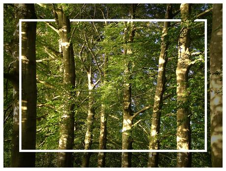 zon, bomen en bladeren