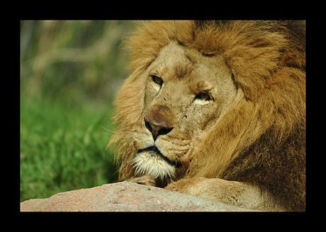 The king of nature