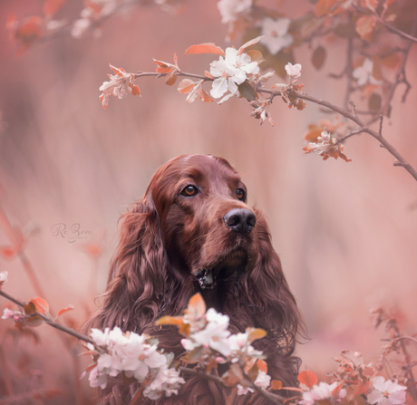 Blossom...
