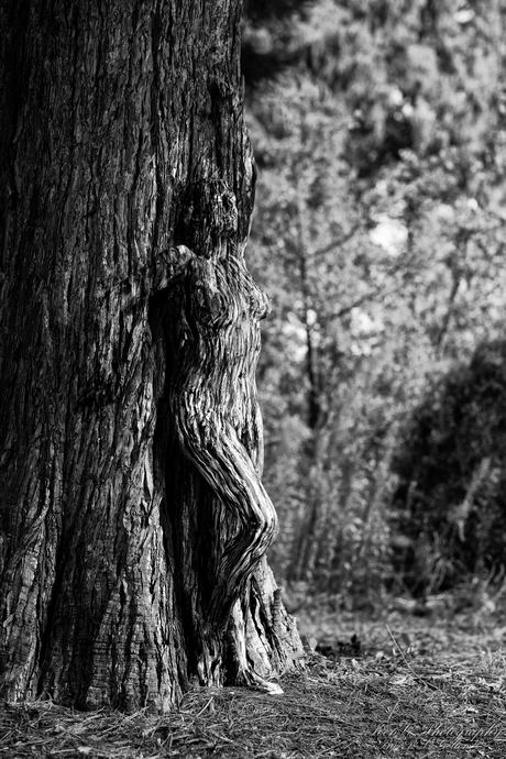 The Soul of a Tree