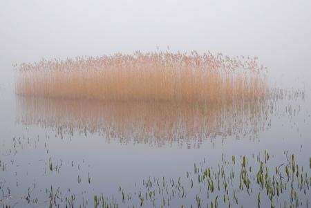 Misty morning.... - - - foto door paulcelus op 08-03-2021 - deze foto bevat: gras, lucht, water, natuur, licht, winter, mist, riet, meer