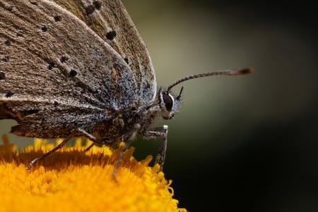 vlinder - vlinder in een botanische tuin vastgelegd... - foto door hansvdbeukel op 24-01-2012 - deze foto bevat: vlinder