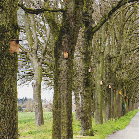 Nestkastjes - Geen eikenprocessierupsen dit jaar.  - foto door WillemH52 op 13-04-2021 - deze foto bevat: nestkast, eiken, rupsen, fabriek, straatlantaarn, natuurlijk landschap, boom, terrestrische plant, kofferbak, hout, gras, biome, bladverliezend