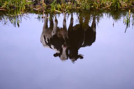 spiegelbeeld....