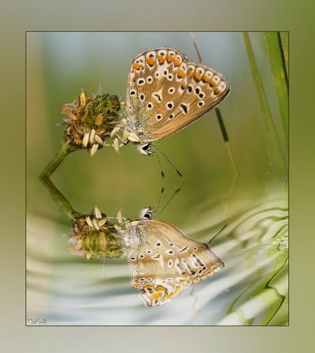 Reflection of beauty....