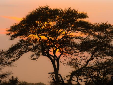 Bayalacamp_SA_sunrise
