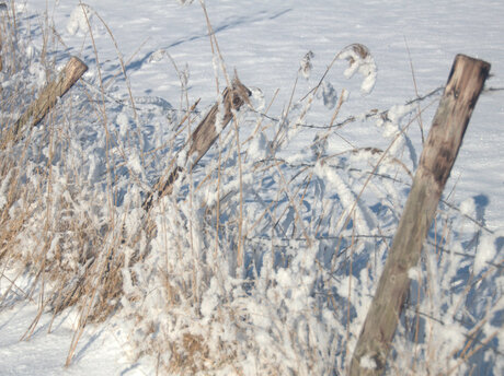 weer en winterwind