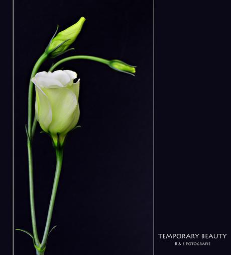 Temporary Beauty..