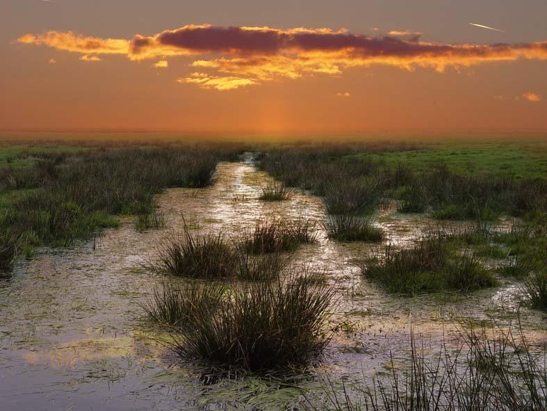 Nederlands moeras? - - - foto door claarcatrijn op 14-07-2005 - deze foto bevat: landschap, zonsondergang