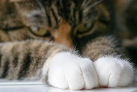Miauw...